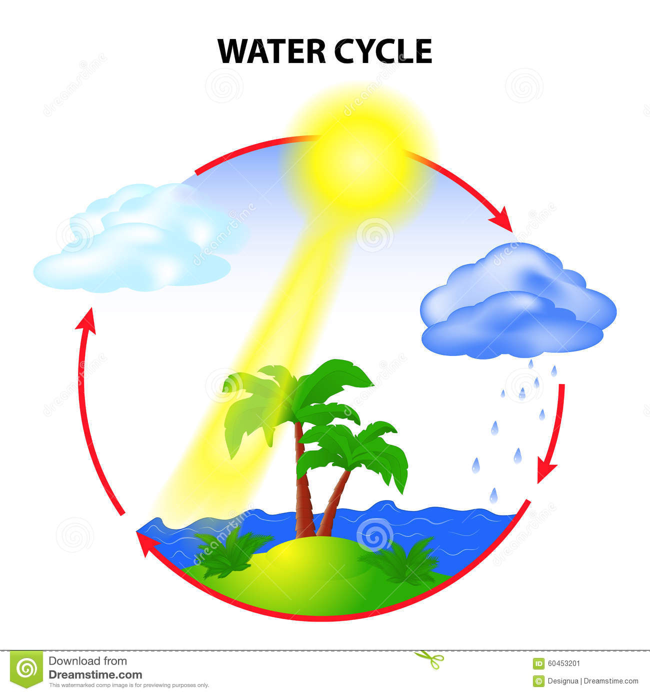Water Cycle Stock Vector - Image: 60453201