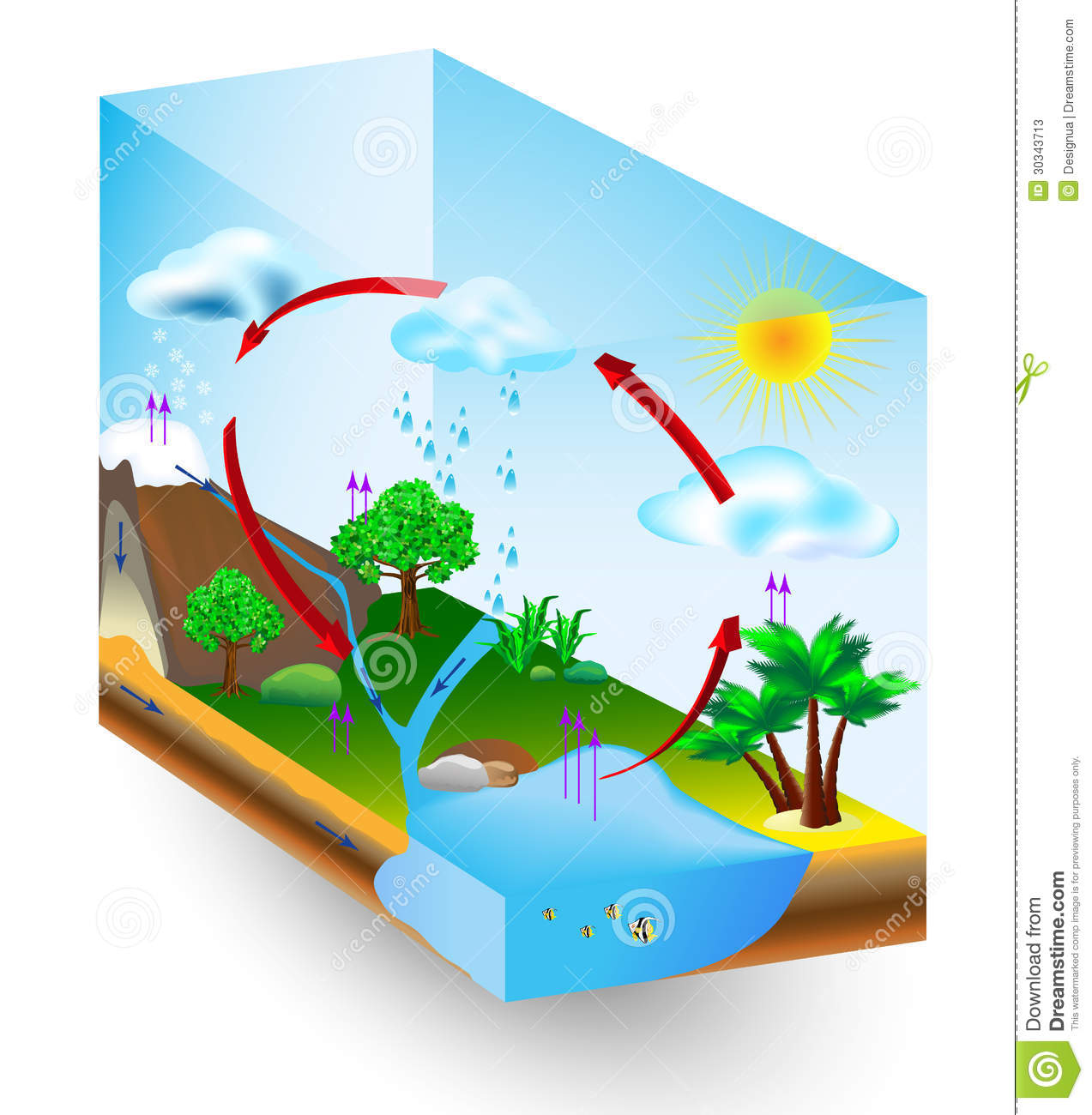 water cycle diagram vector  condensation, evaporation and environment