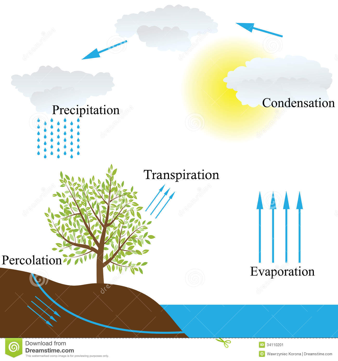 Vector schematic representation of the water cycle in nature.