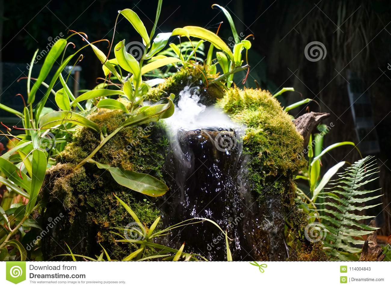 A Magical Waterfall With Plants Stock Image - Image of plant, plants