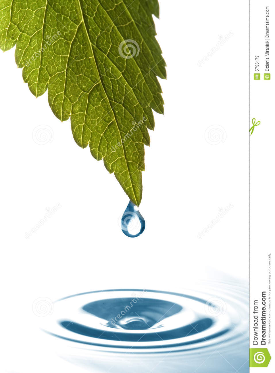 Water Dripping Of A Leaf Royalty Free Stock Images  Image. Decoration Ideas Living Room. Simple Decoration Ideas For Living Room. Small Living Room Side Tables. Candice Tells All Living Room. Designer Wallpaper For Living Room. Living Room Walls Decor. Living Room Ideas Shabby Chic. 1970s Living Room