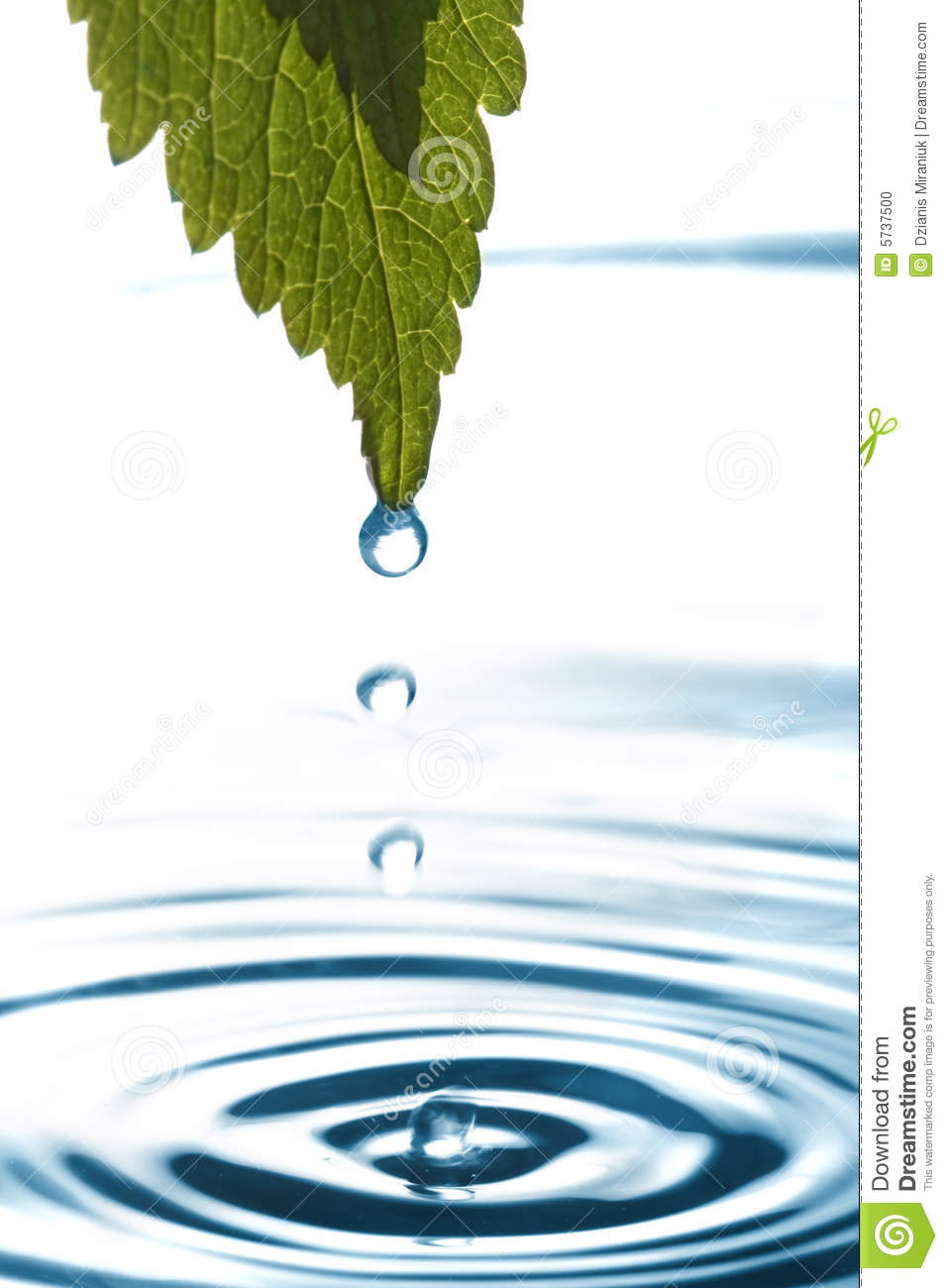 Water Dripping Of A Leaf Stock Photo  Image 5737500. Glass Wall Living Room. The W Living Room. Comfy Chairs For Living Room. American Freight Living Room Sets. Deer Themed Living Room. Value City Living Room Tables. Cheap Decorating Ideas For Living Room Walls. Matching Chairs For Living Room
