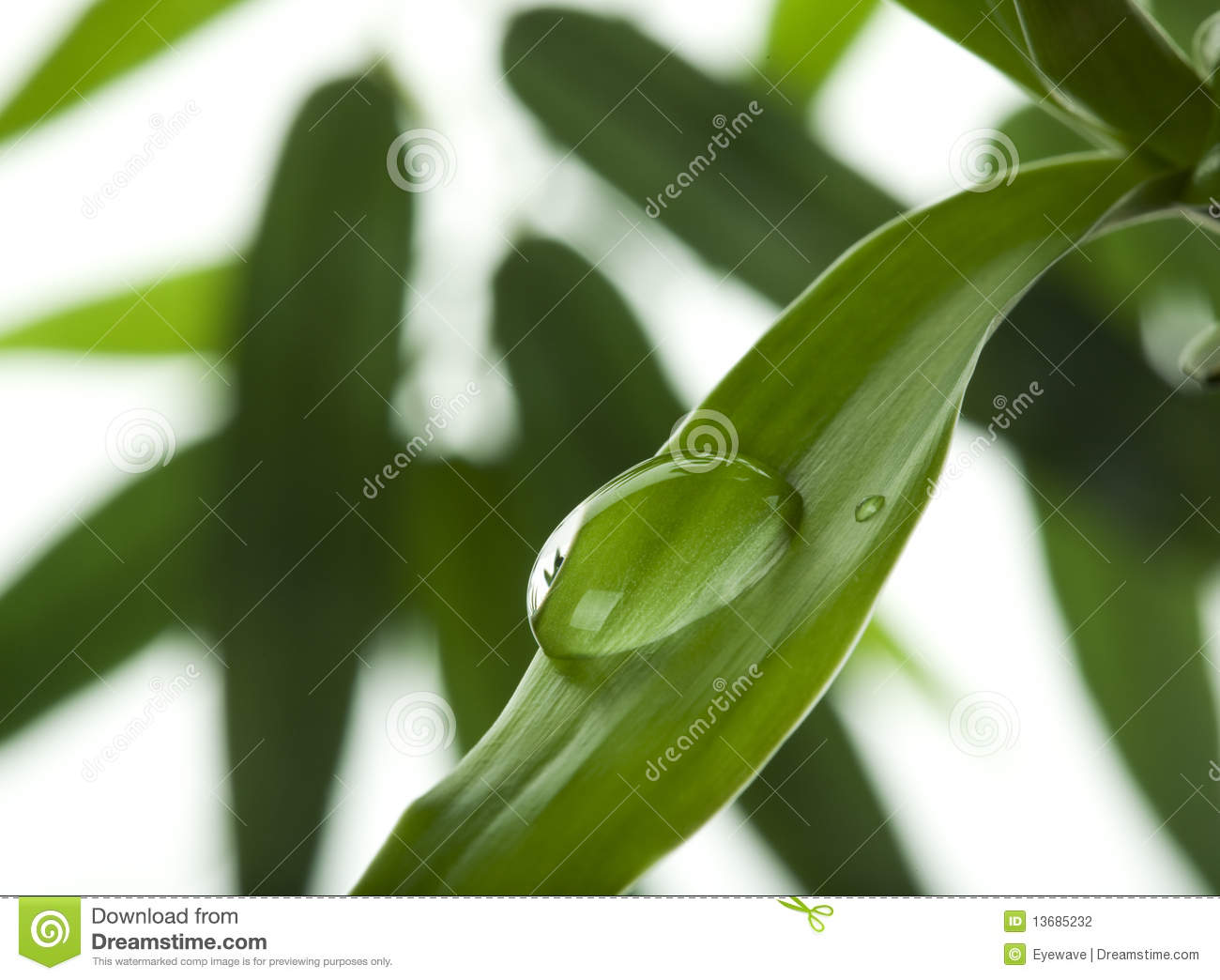 Stock Photography  Water drop on bamboo leafWater Drop Photography On Leaf