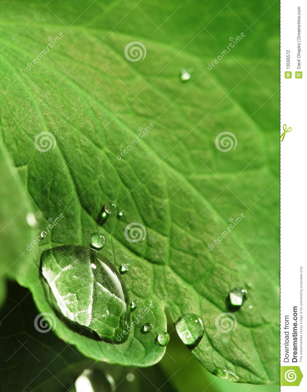 Stock Photography  Water drop on leafWater Drop Photography On Leaf