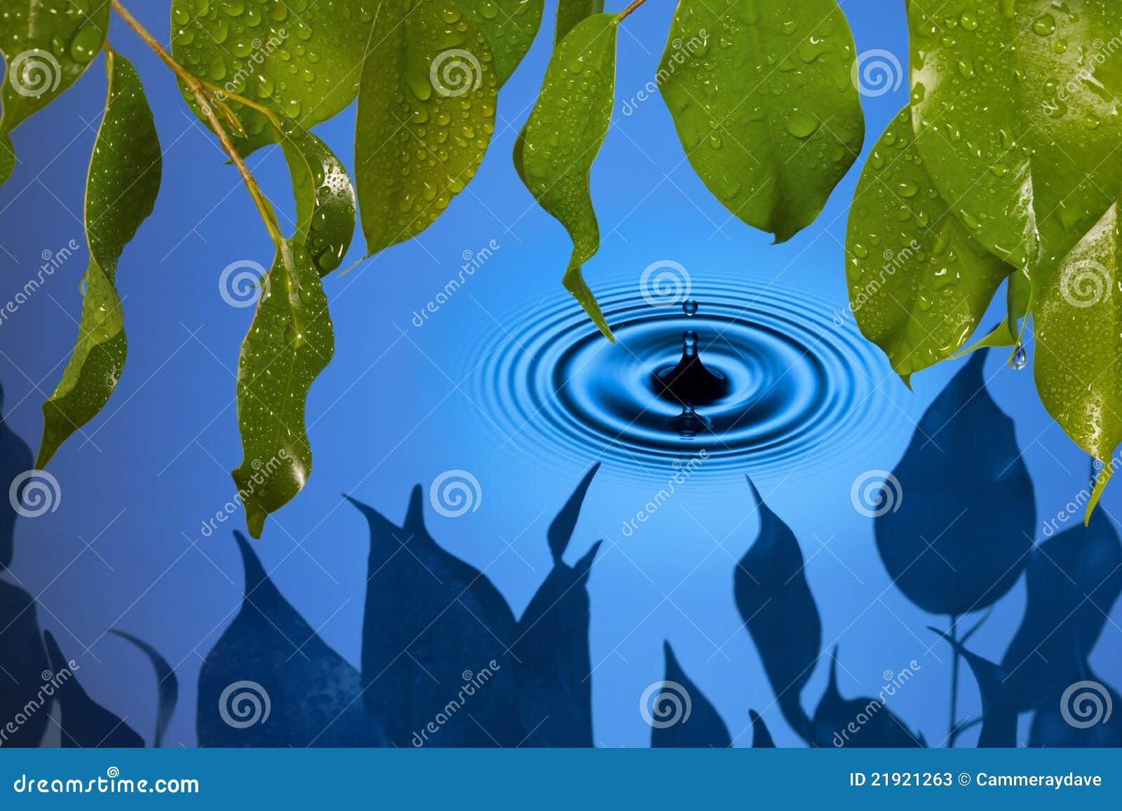 Water Drop Leaves