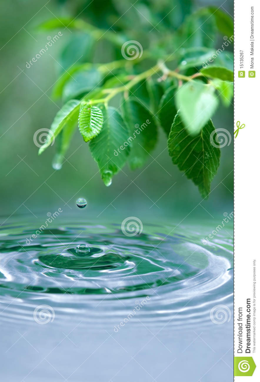 Water drop and wet leaves