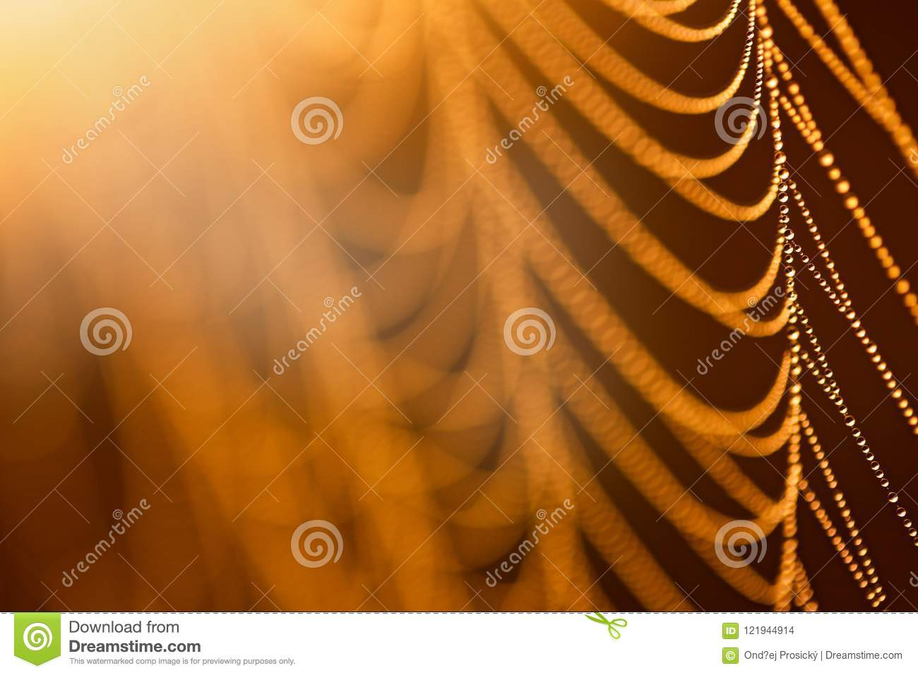 Water drops on a cobweb in the sunlight, yellow abstract background. Sunrise in the nature, morning light.