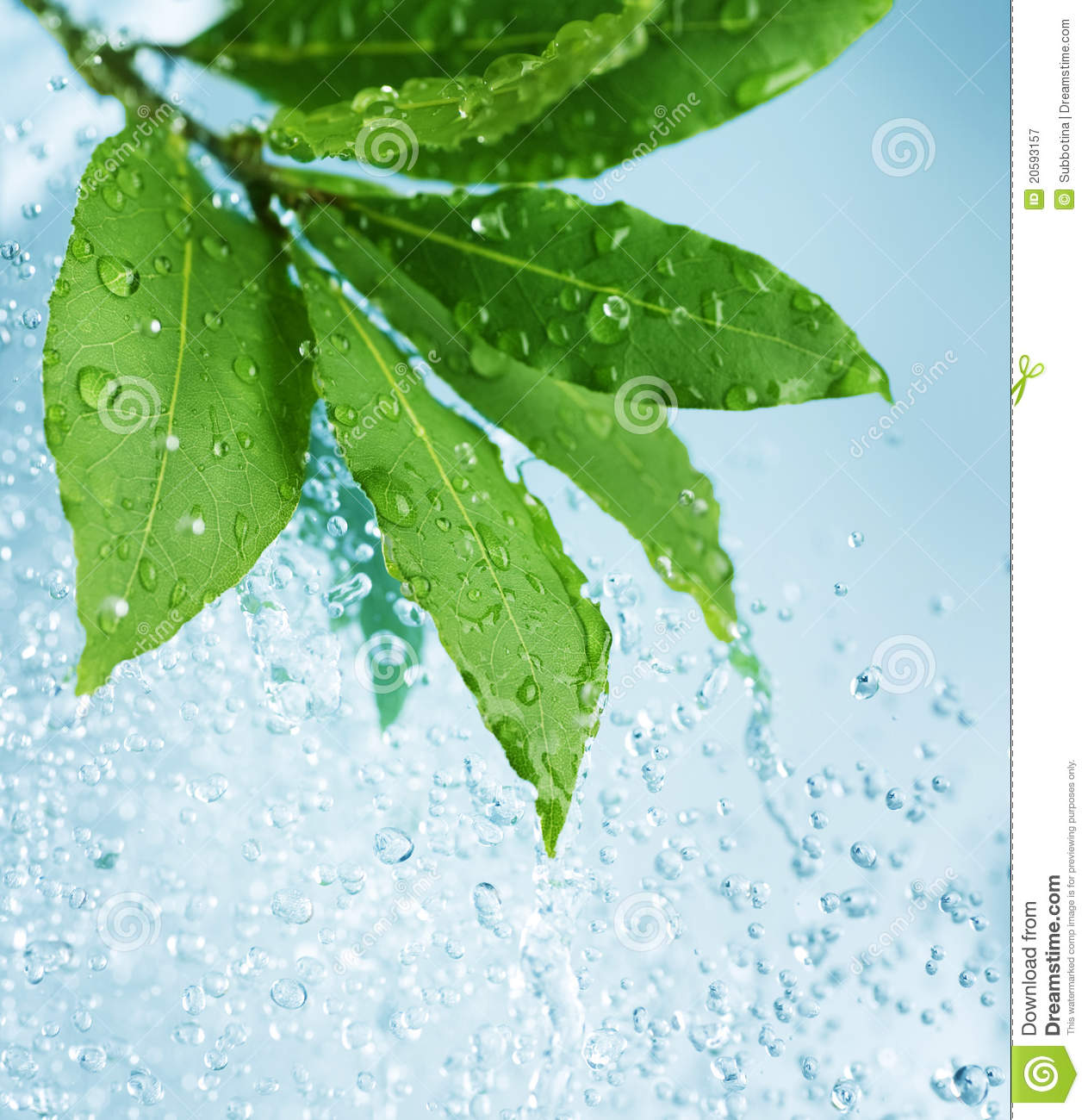 Water Drops And Fresh Green Leaves Royalty Free Stock