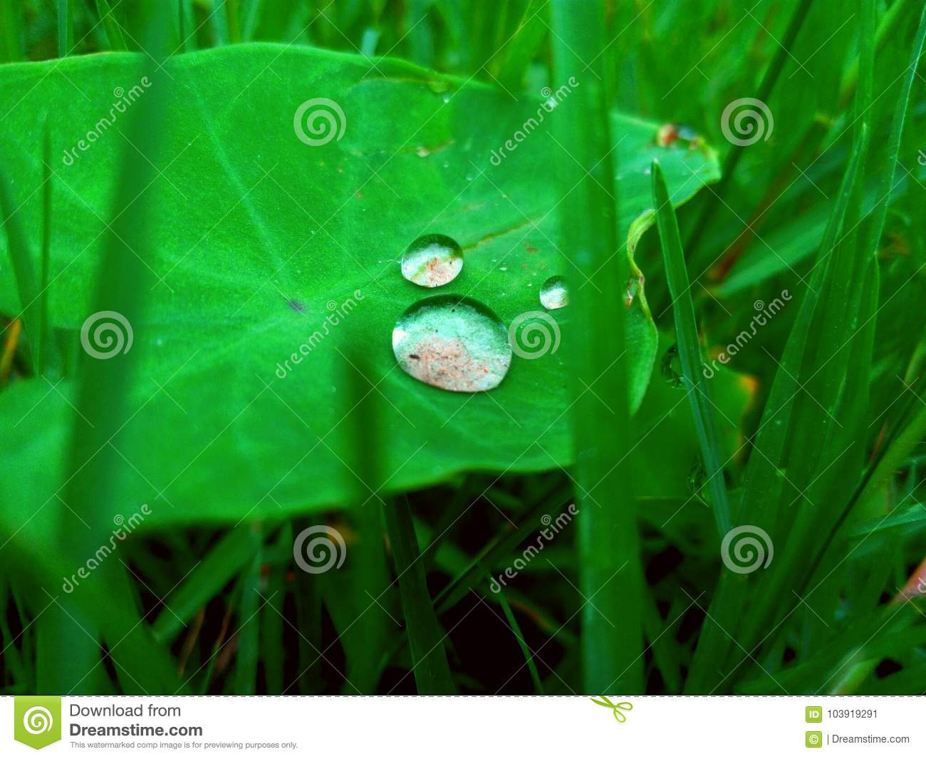 Water drops on leaves stock image  Image of drops, leaves - 103919291