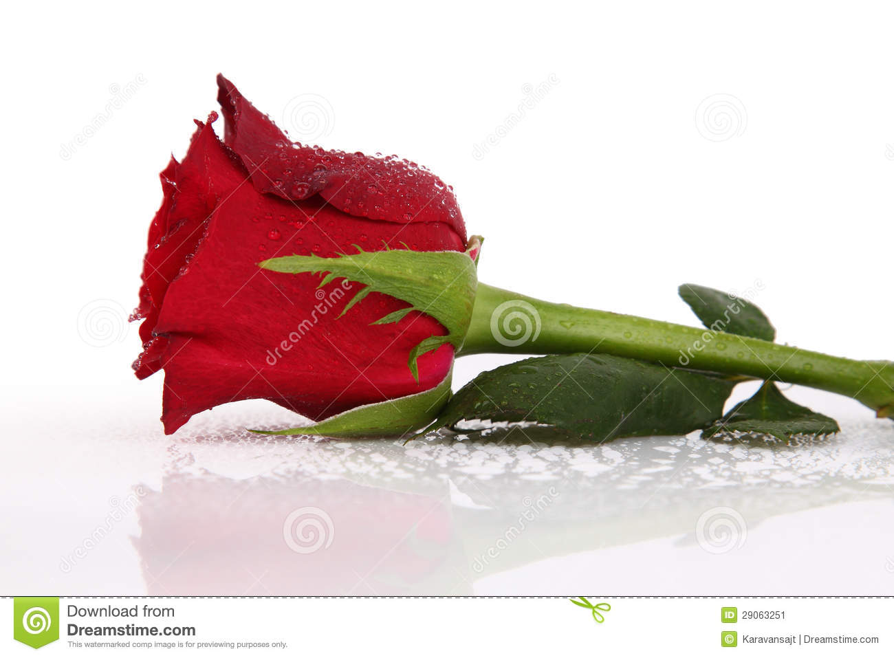 water drops on single red rose stock image image 29063251