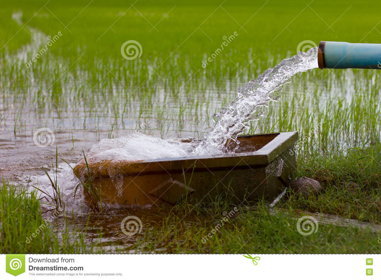 Download comp & Water Flows Into A Rice Field. Stock Image - Image of background ...