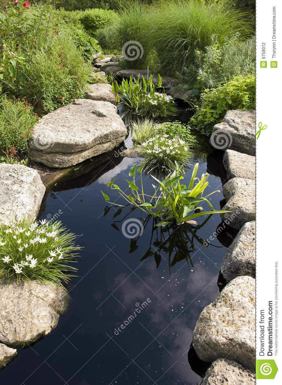 Water garden stock photography image 6758012 for Japanese water plants