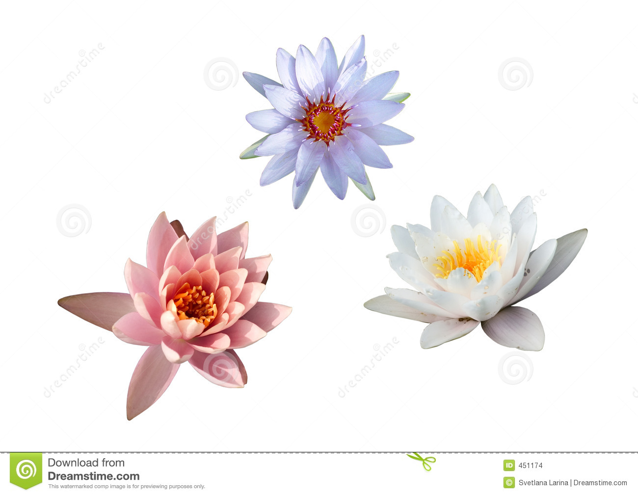 Water lilies collection (3 for 1)