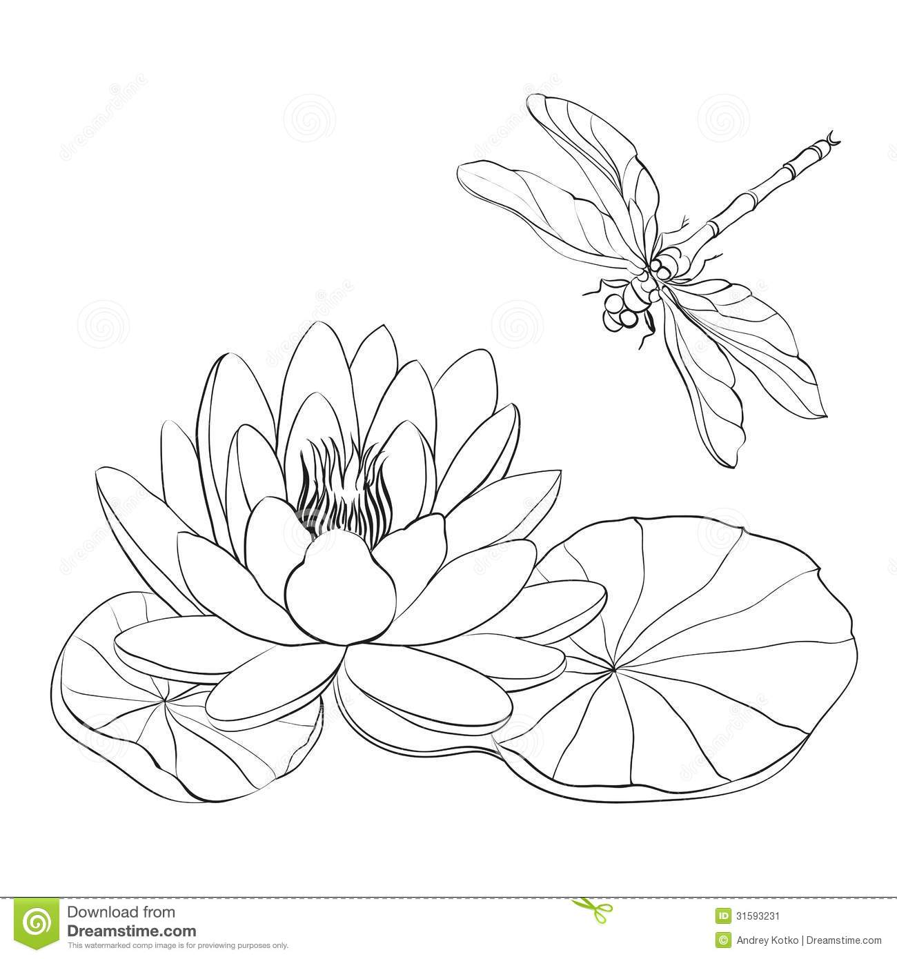 water lily and dragonfly stock vector image of lake
