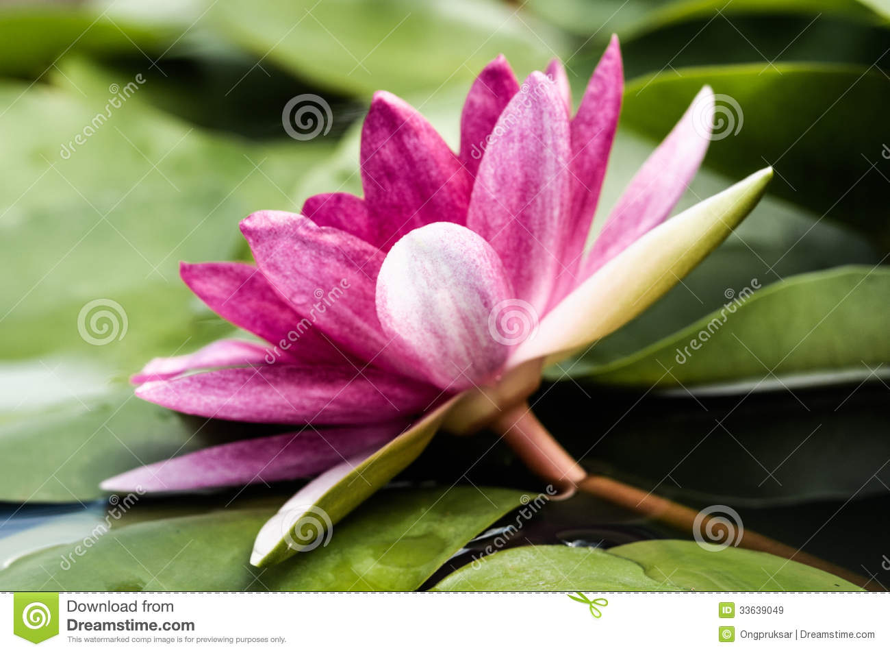 The lotus flower buddhism image collections fresh lotus flowers lotus flower buddhism choice image flower wallpaper hd izmirmasajfo