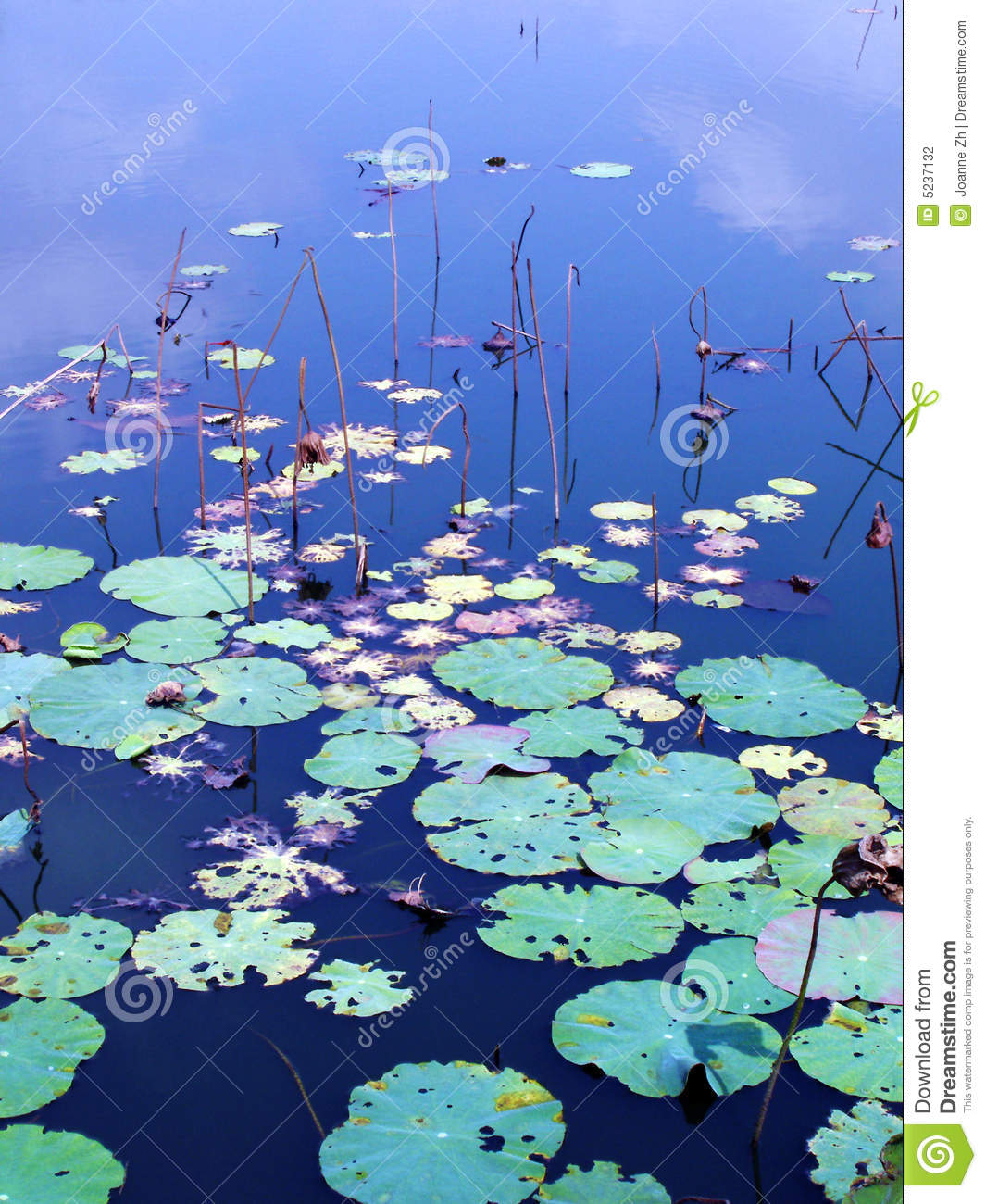 Water Lily Pads In Autumn Stock Photo Image Of Abstract