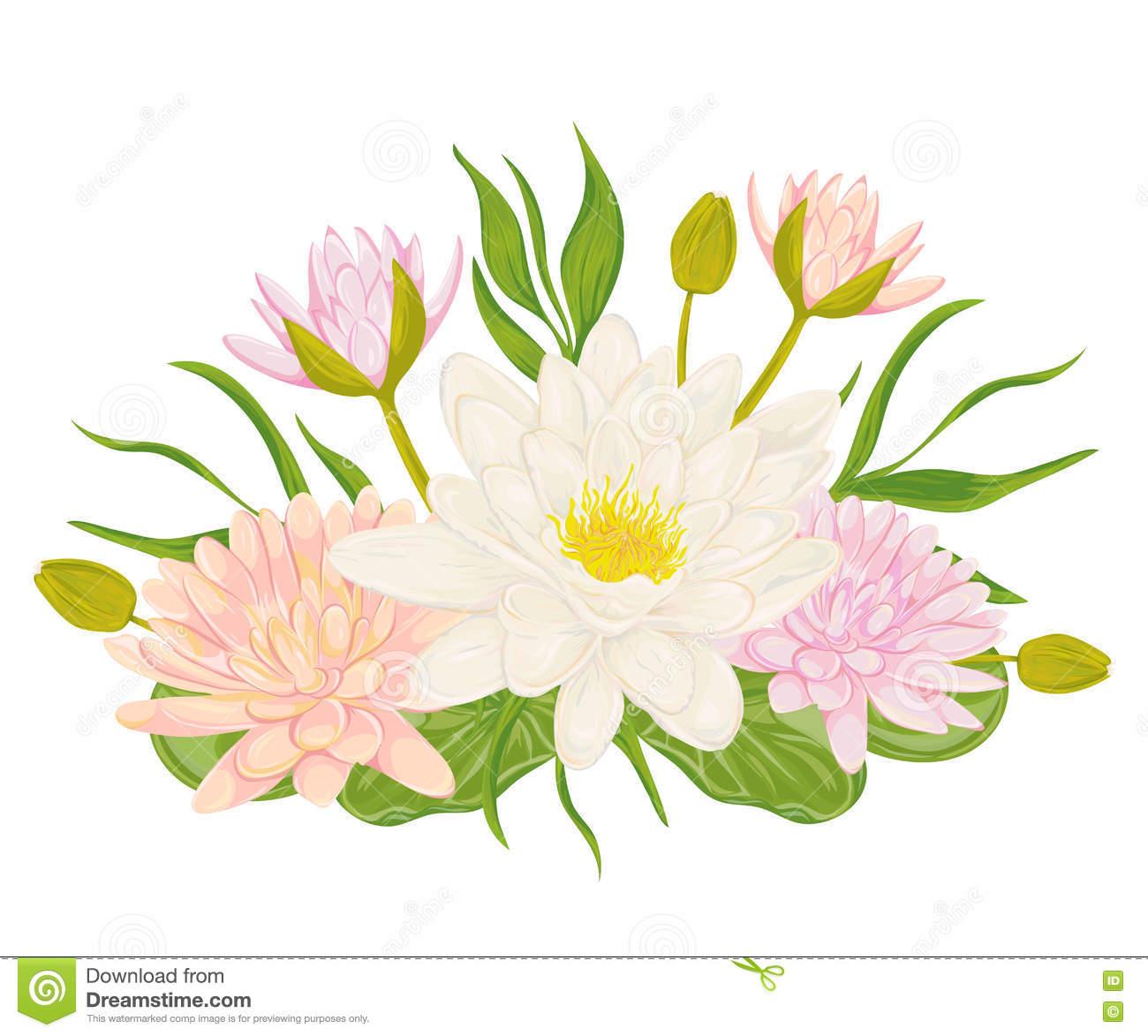 Water lily set collection decorative design elements for wedding collection decorative design elements for wedding invitations and birthday cards stopboris Images