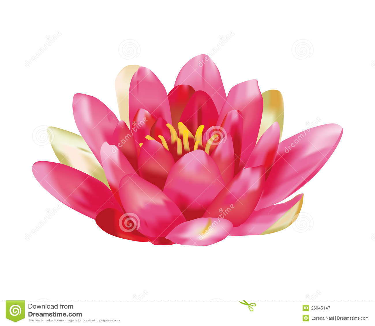 Water lily vector stock vector. Image of environment ...