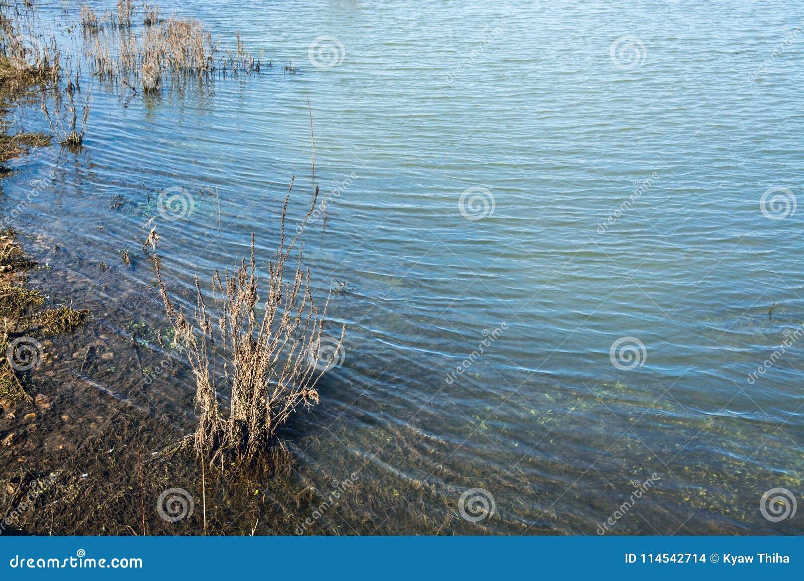 Water in ondiep meer die subtiele golven vormen door de wind - 1