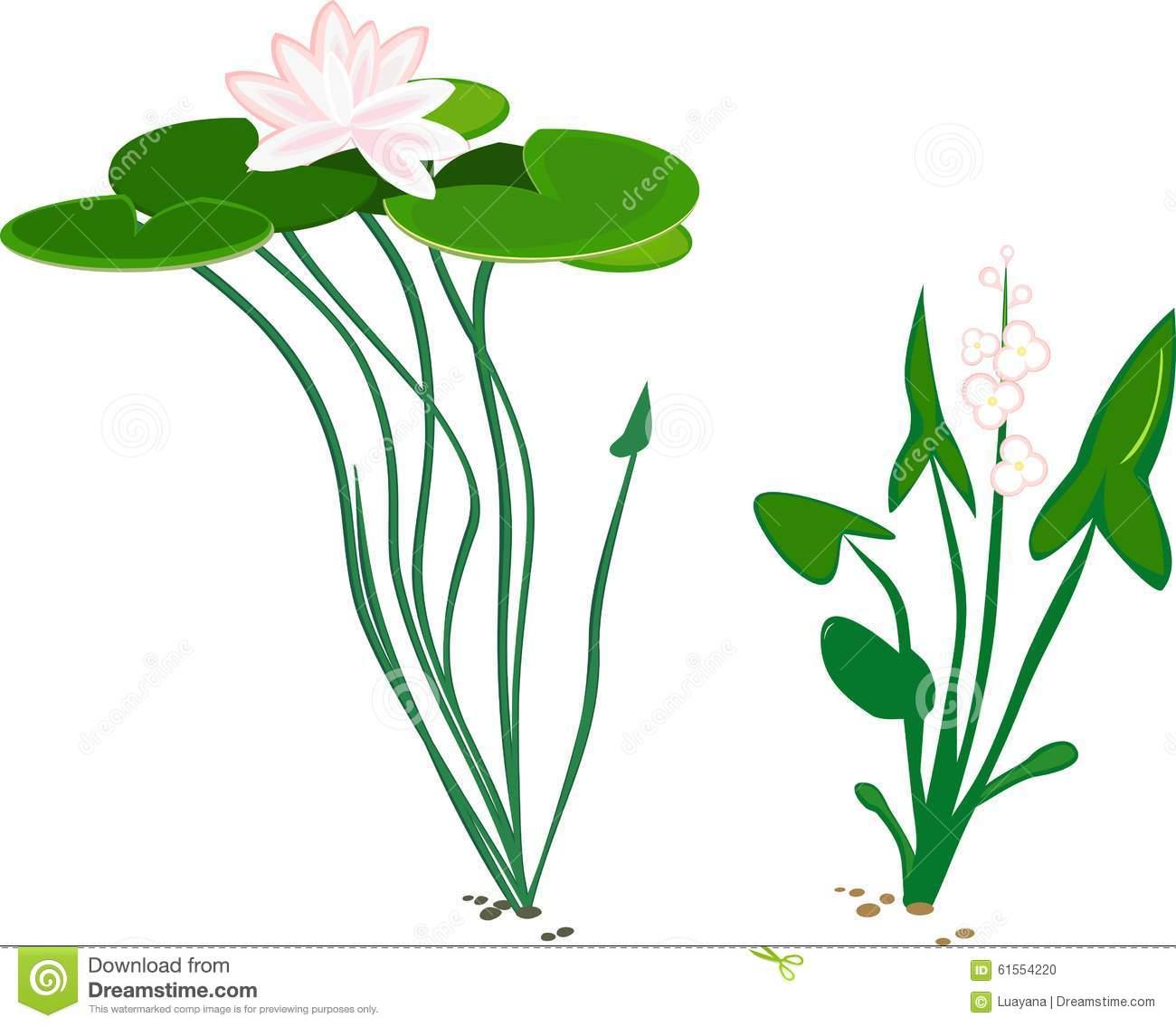 Water plant duck potato and water lily stock vector illustration water plant duck potato and water lily izmirmasajfo