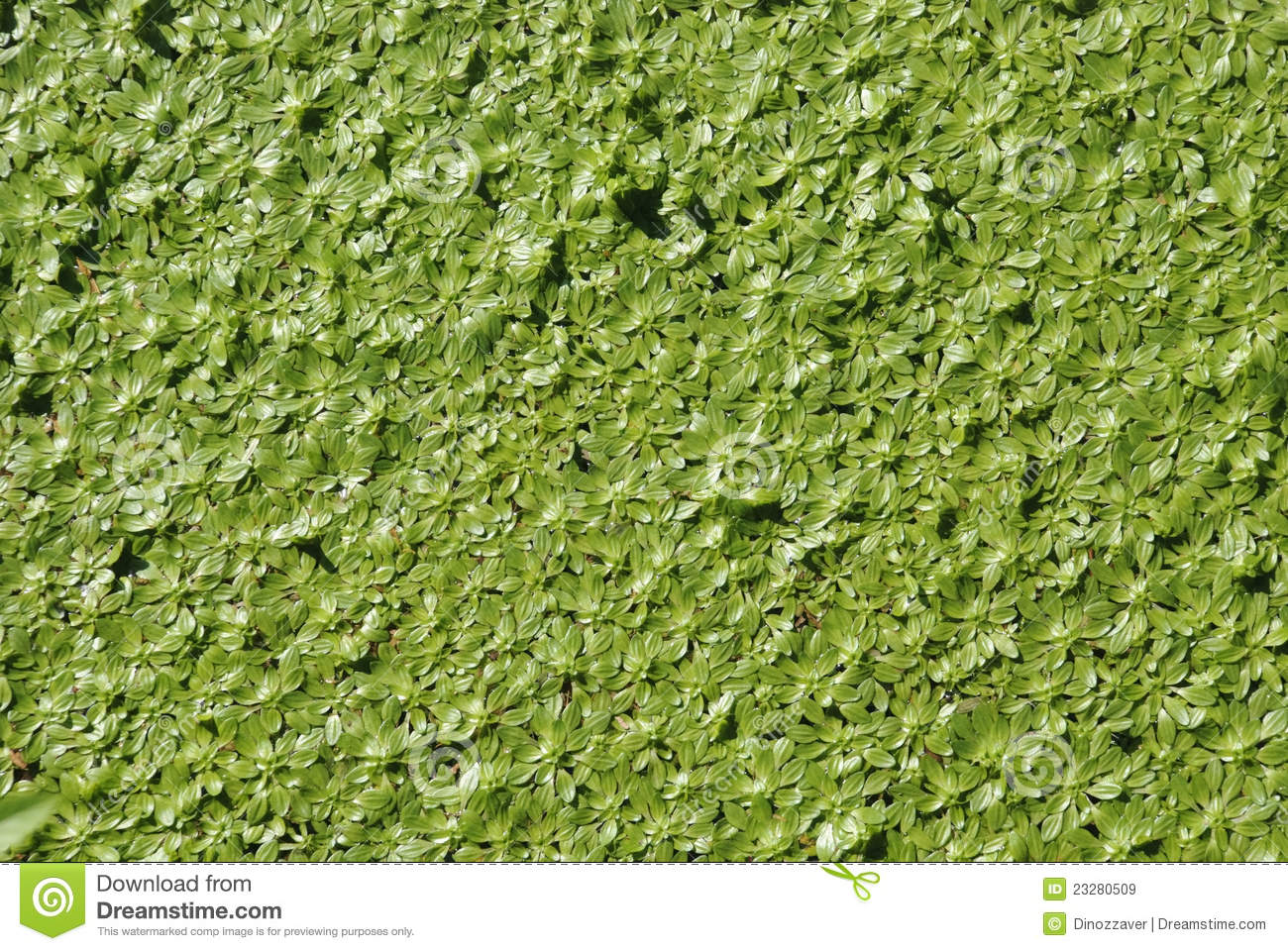 Water plants stock image image of surface macro for Waterside plants