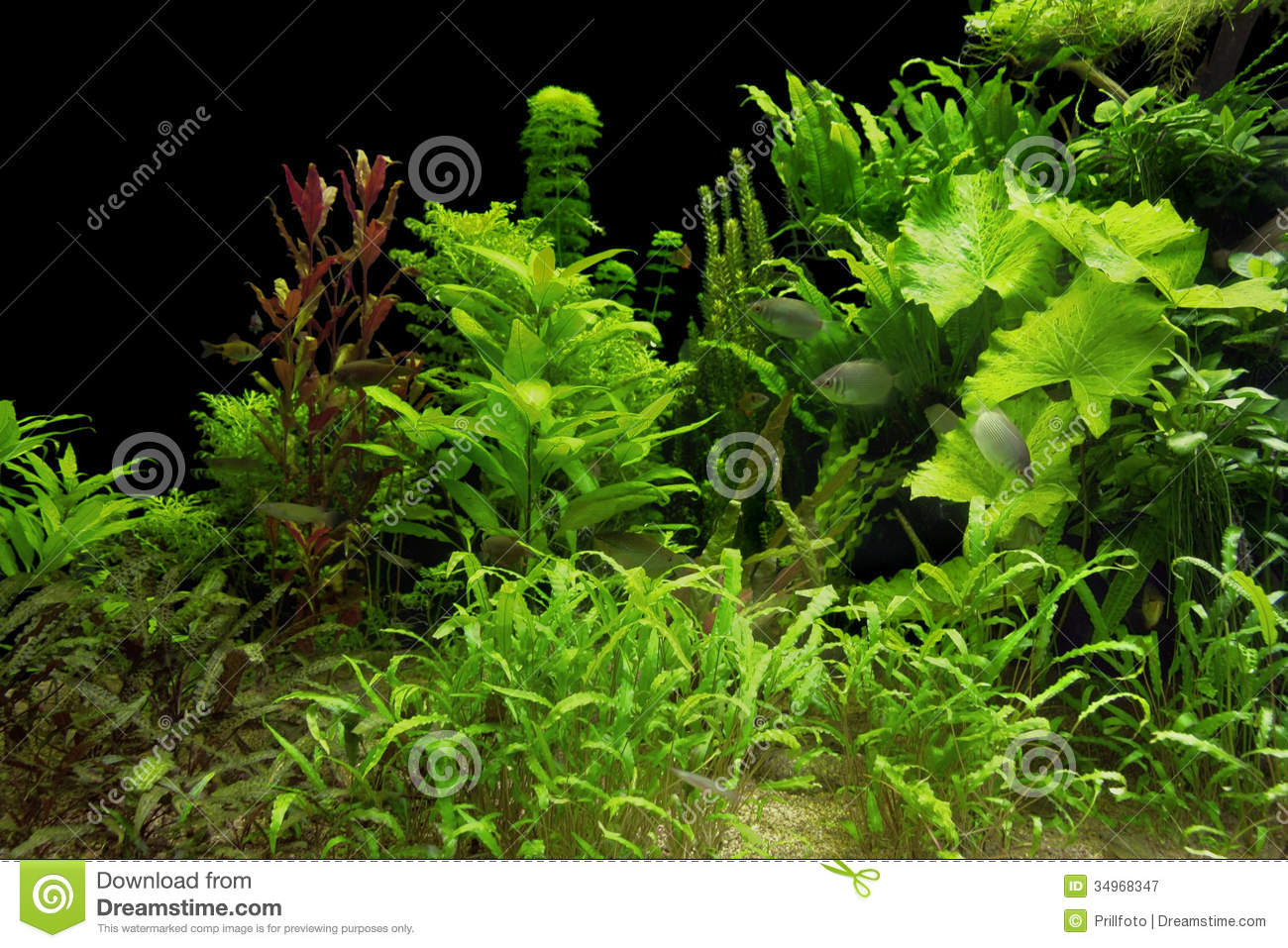 Water plants royalty free stock photography image 34968347 for Underwater pond plants