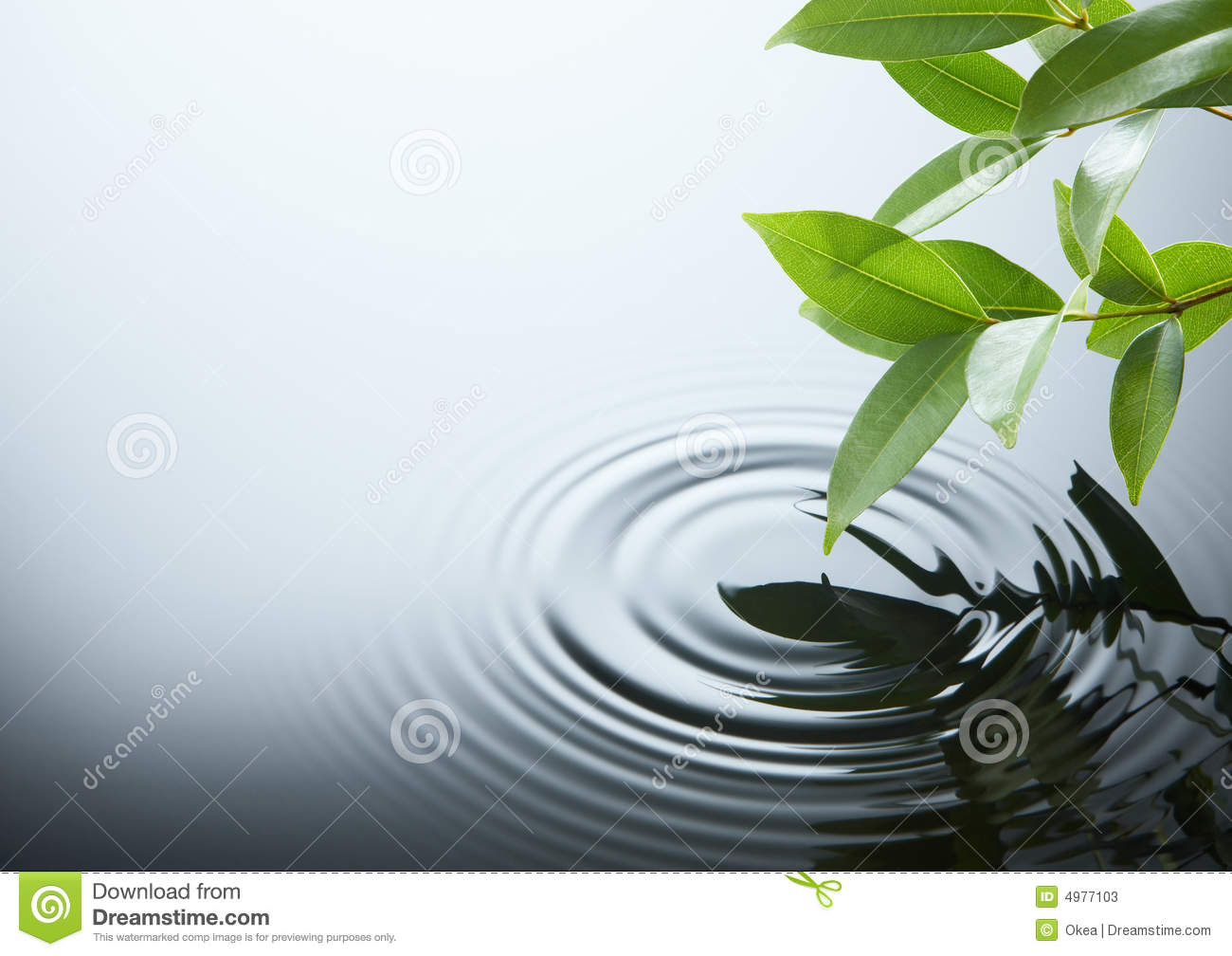 Water ripple and leaf