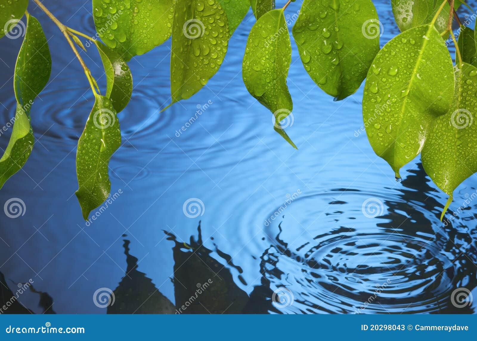 Water Ripples Leaves Rain Background