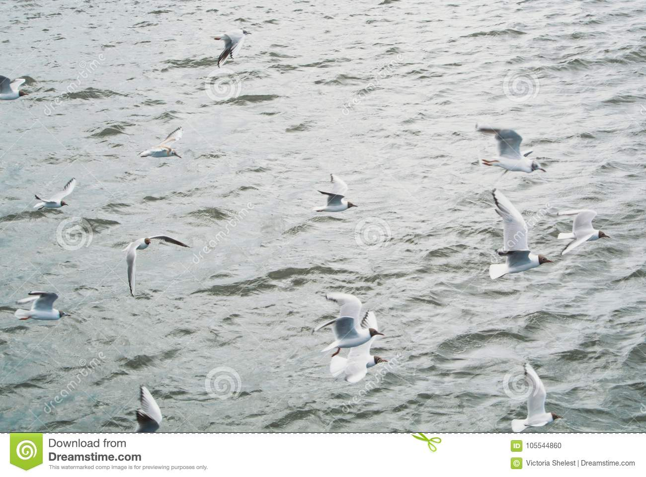 Water sea background with a large group flock of seagulls flying