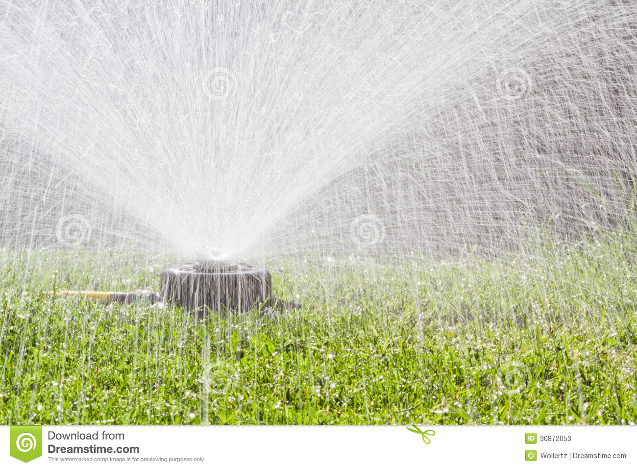 in the back yard with a yellow hose and a spray irrigation system