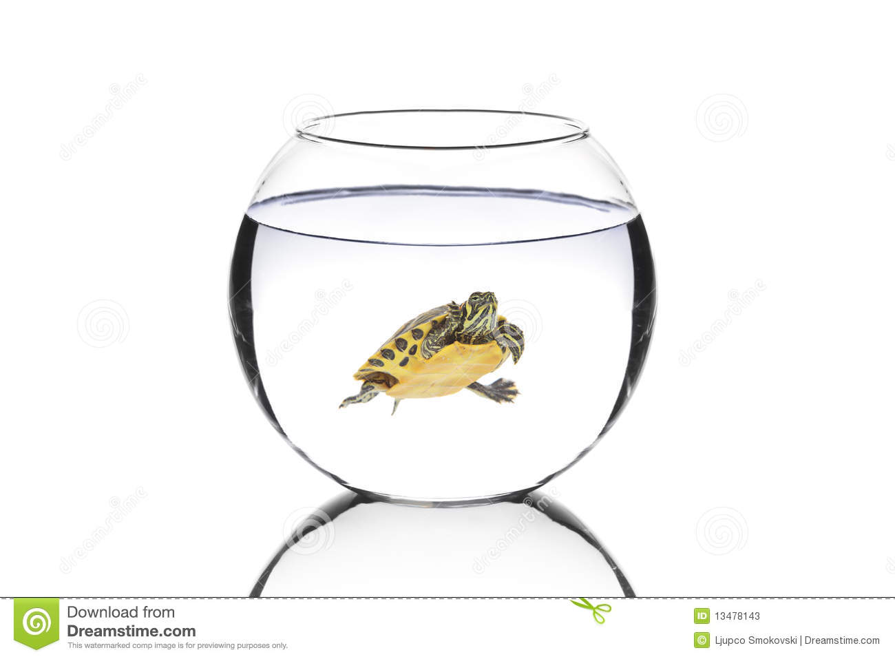 Water Turtle In A Bowl Stock Photos Image 13478143