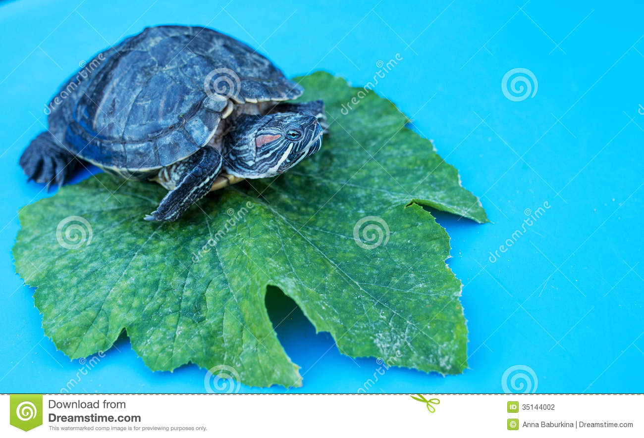 Water Turtle Stock Photography - Image: 35144002