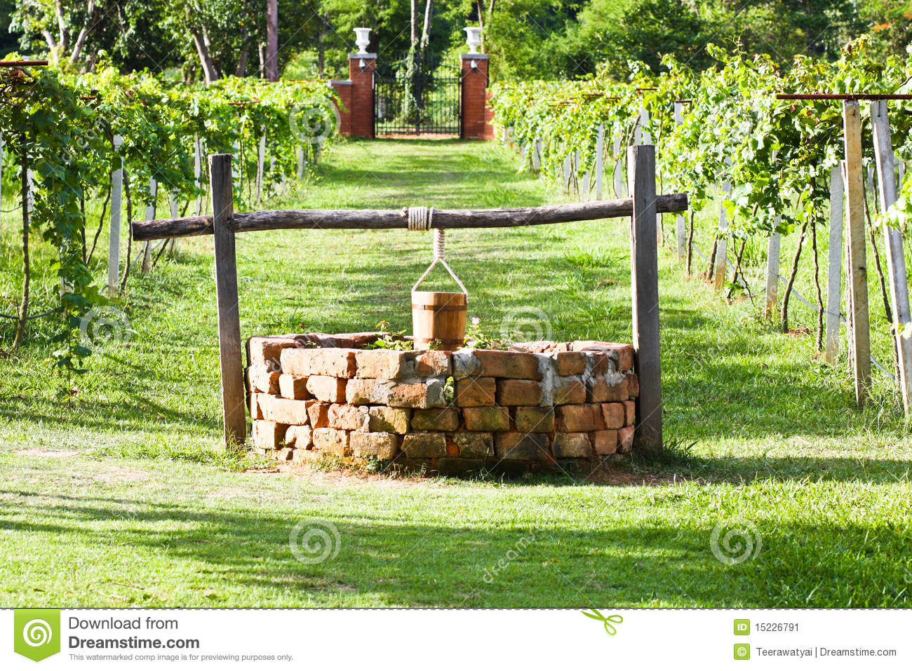 Water well in grape field stock image image of drink for Well pictures