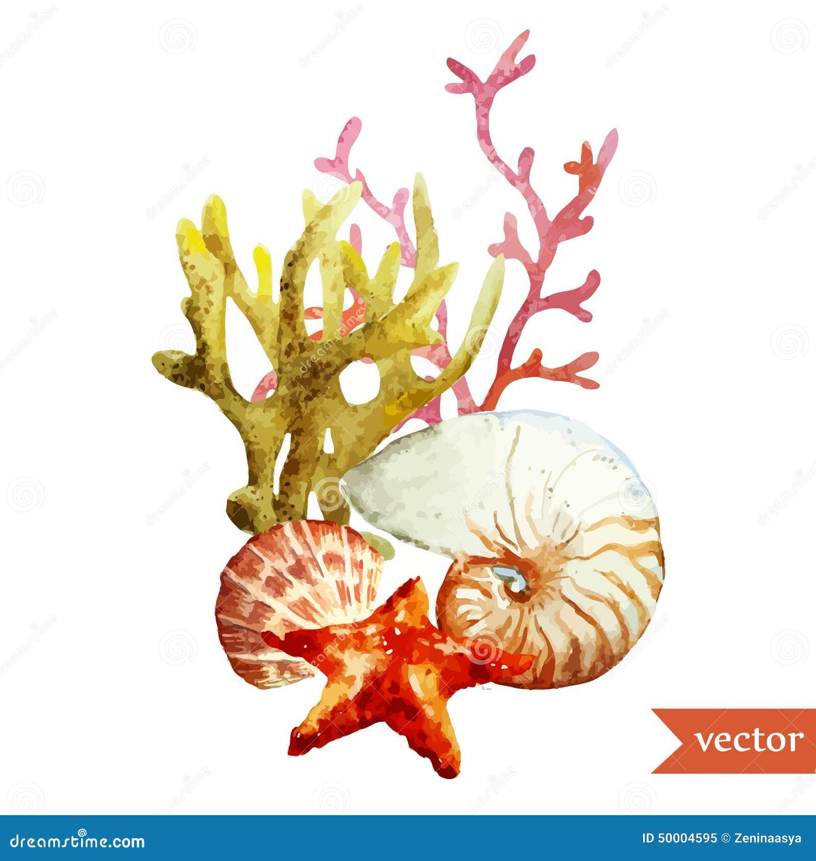 Watercolor, θάλασσα, κοράλλι, κοχύλι