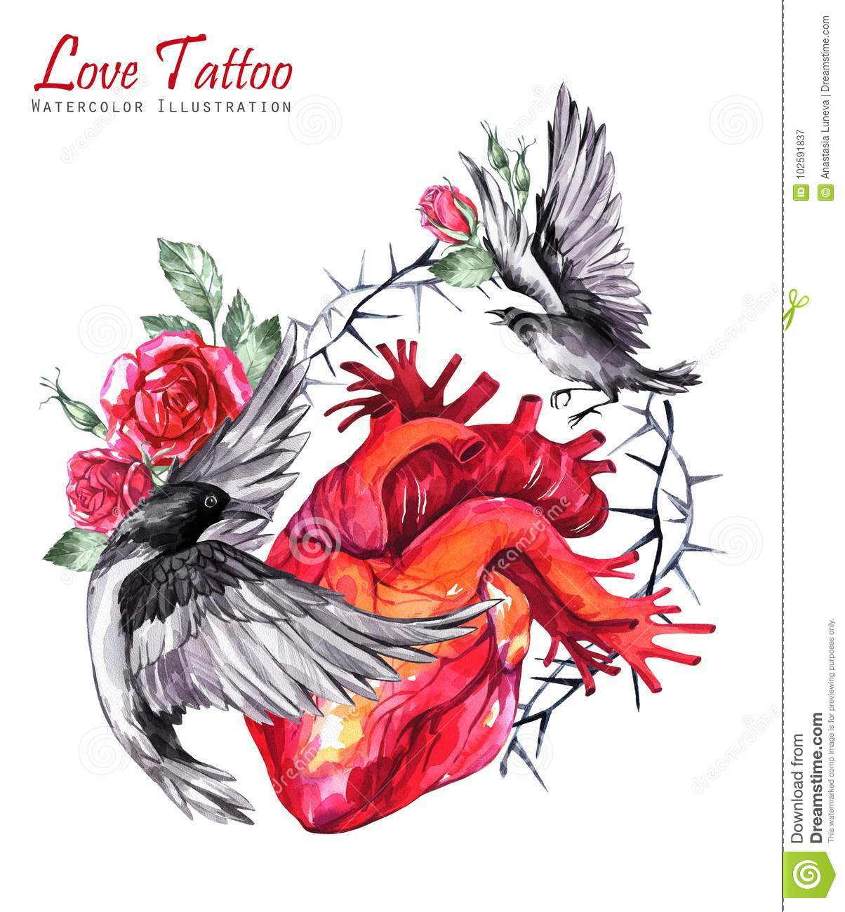 Watercolor Anatomic Heart With Sketches Of Roses Thorns Leaves And