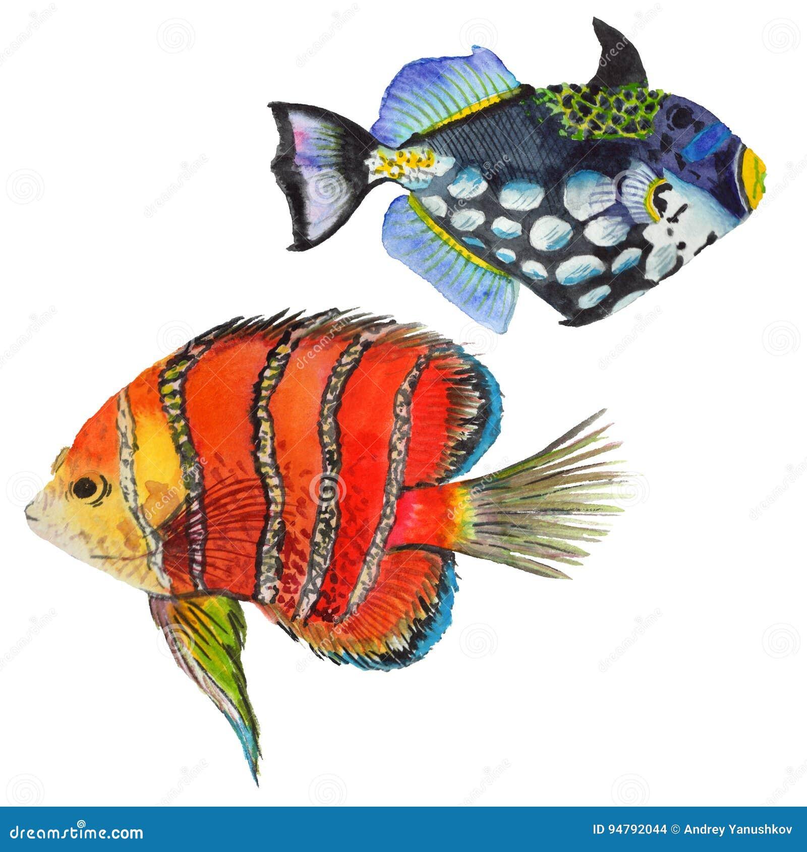 Watercolor Aquatic Underwater Colorful Tropical Fish Set. Red Sea ...