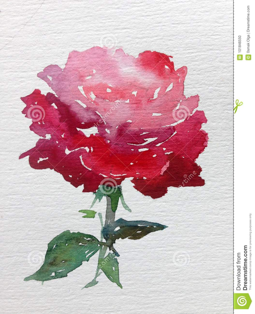 Watercolor Art Background Colorful Flower Rose Red Stock