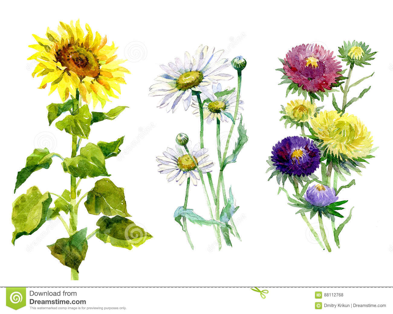 Watercolor aster, chrysanthemum, sunflower, chamomile bouquet