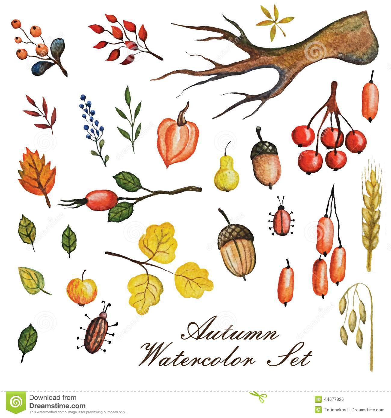 Watercolor Autumn Branches With LeavesApplepear Stock Illustration