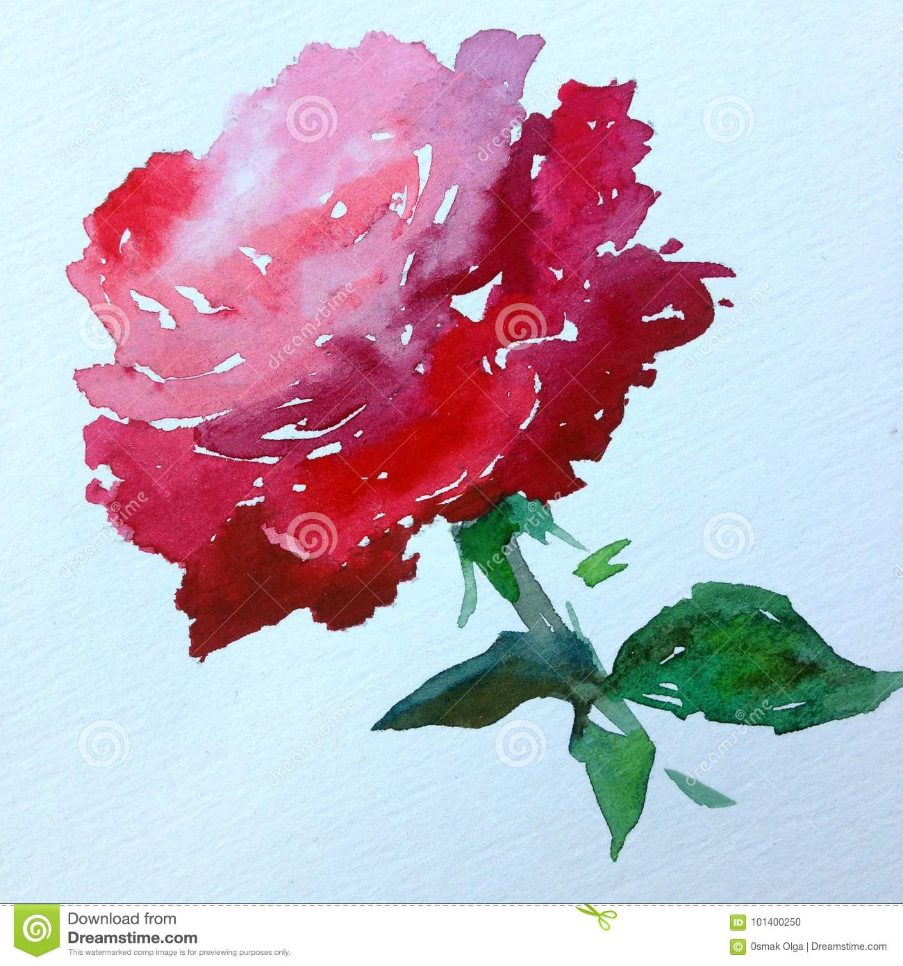 Watercolor Art Background Abstract Red Pink Single Flower Rose Colorful Textured