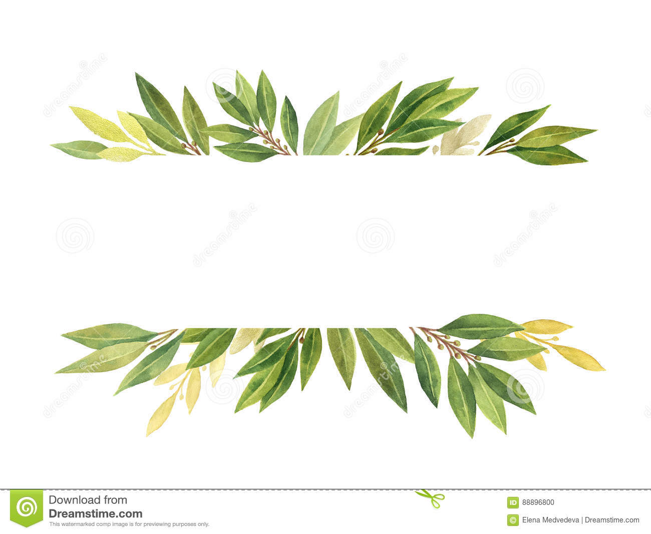 Watercolor Bay Leaf Isolated On White Background. Stock ...