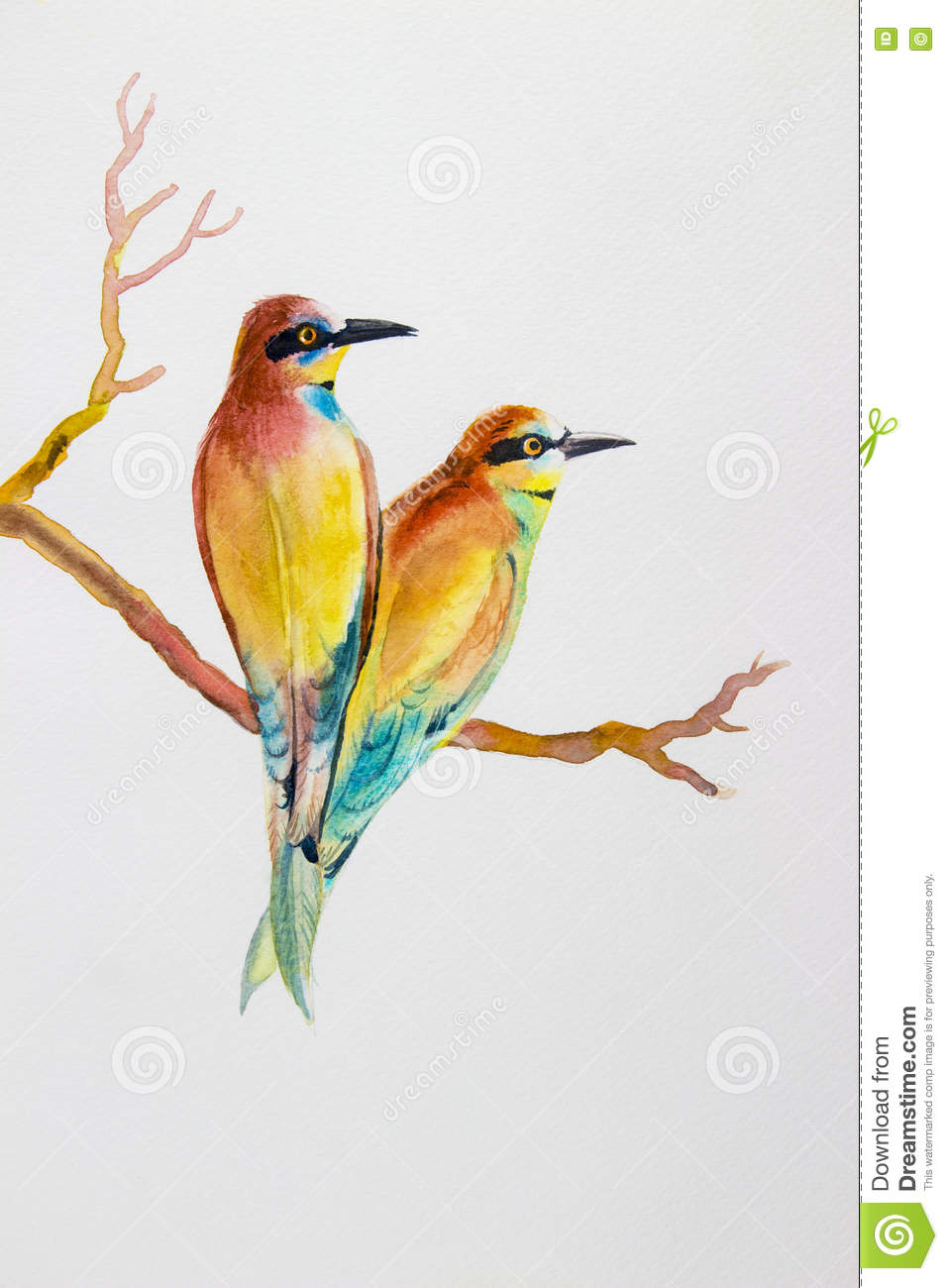 watercolor bird painting original realistic colorful of bird lovers