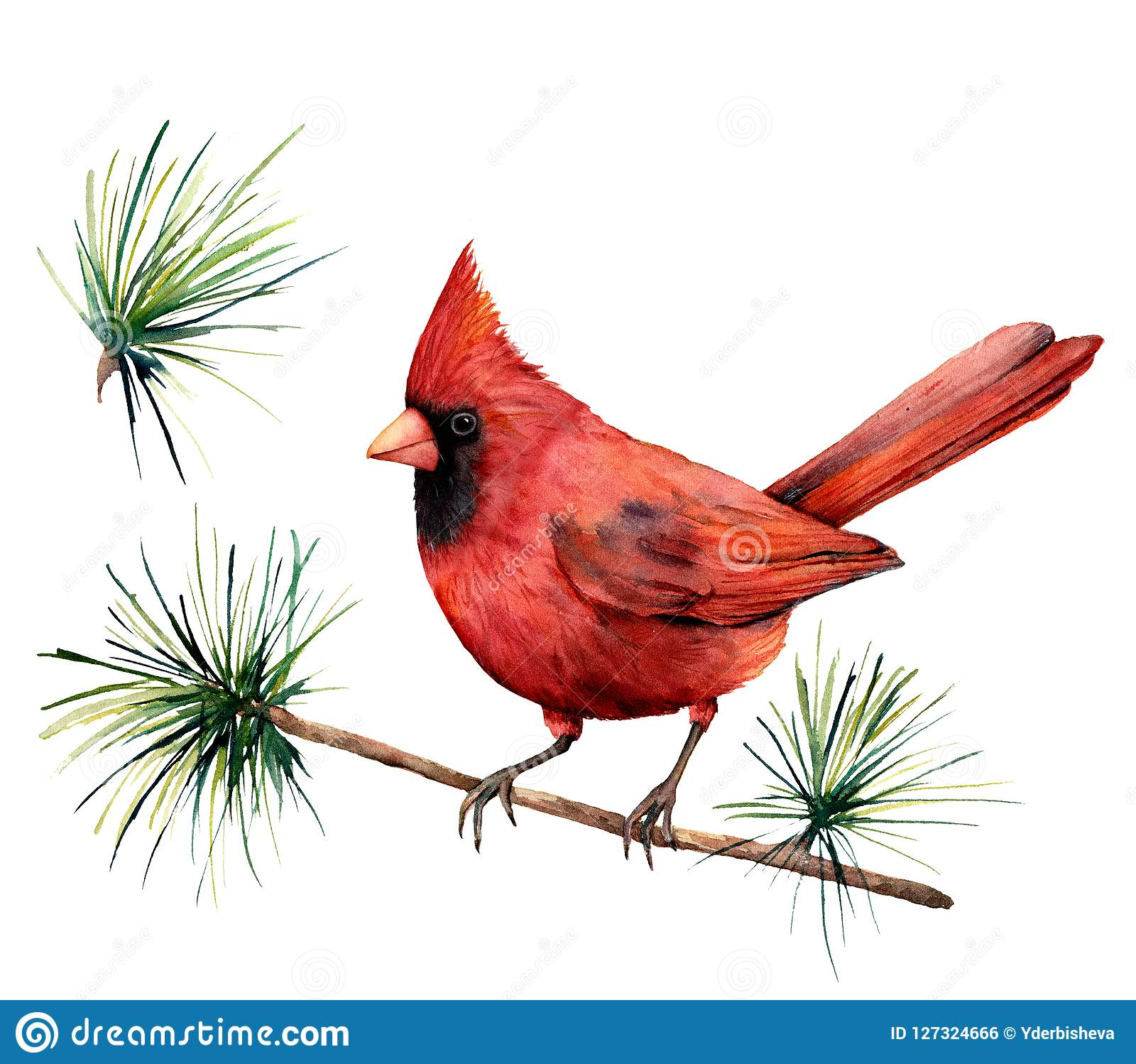 Watercolor bird red cardinal. Hand painted greeting card illustration with bird and branch isolated on white background
