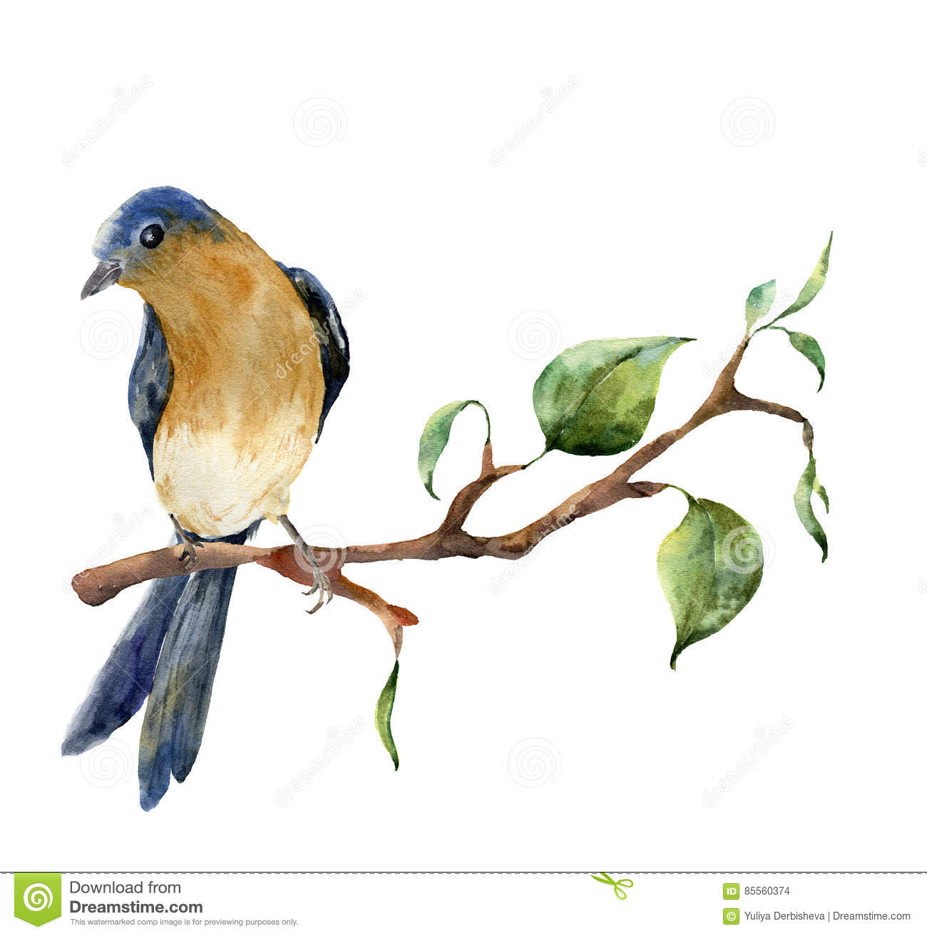 Watercolor Bird Sitting On Tree Branch With Leaves Hand Painted Spring Illustration With Robin Redbreast Isolated On Stock Illustration Illustration Of Fluffy Paint 85560374