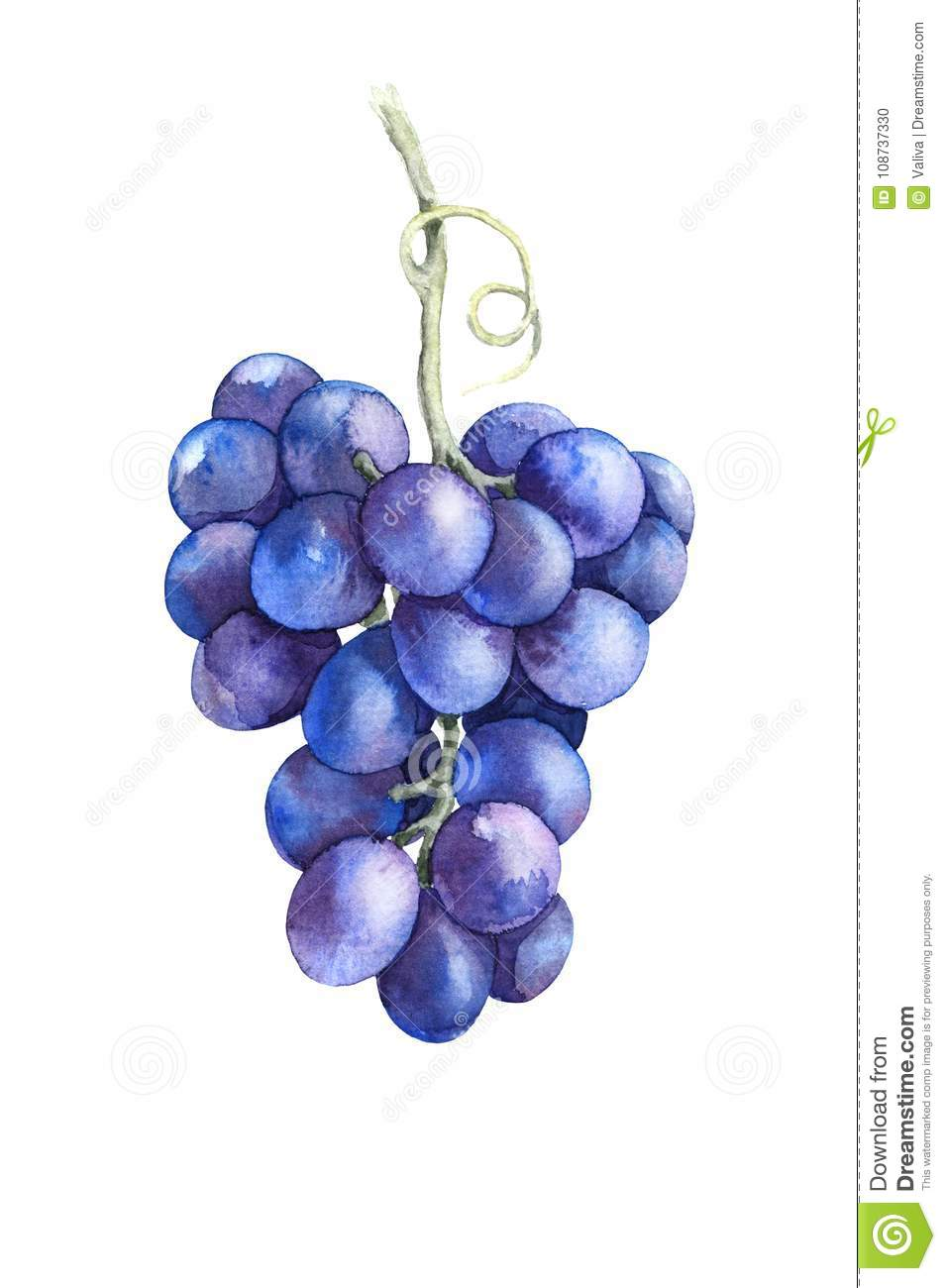 Watercolor Blue Grapes Isolated