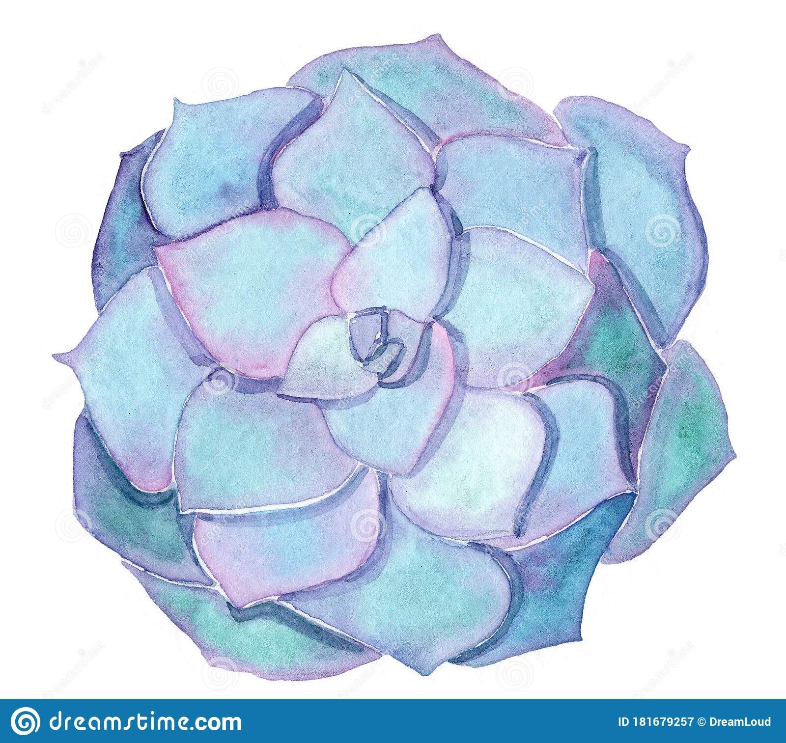 Watercolor Blue And Purple Succulent Echeveria Isolated On White Background Stock Illustration Illustration Of Beautiful Background 181679257