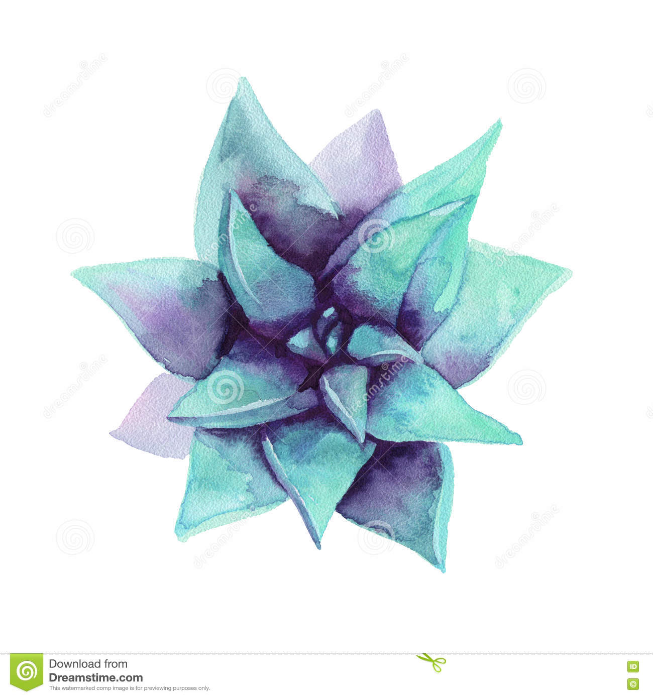 Watercolor Blue Succulent The View From The Top Stock Illustration Illustration Of Home Floral 74408875