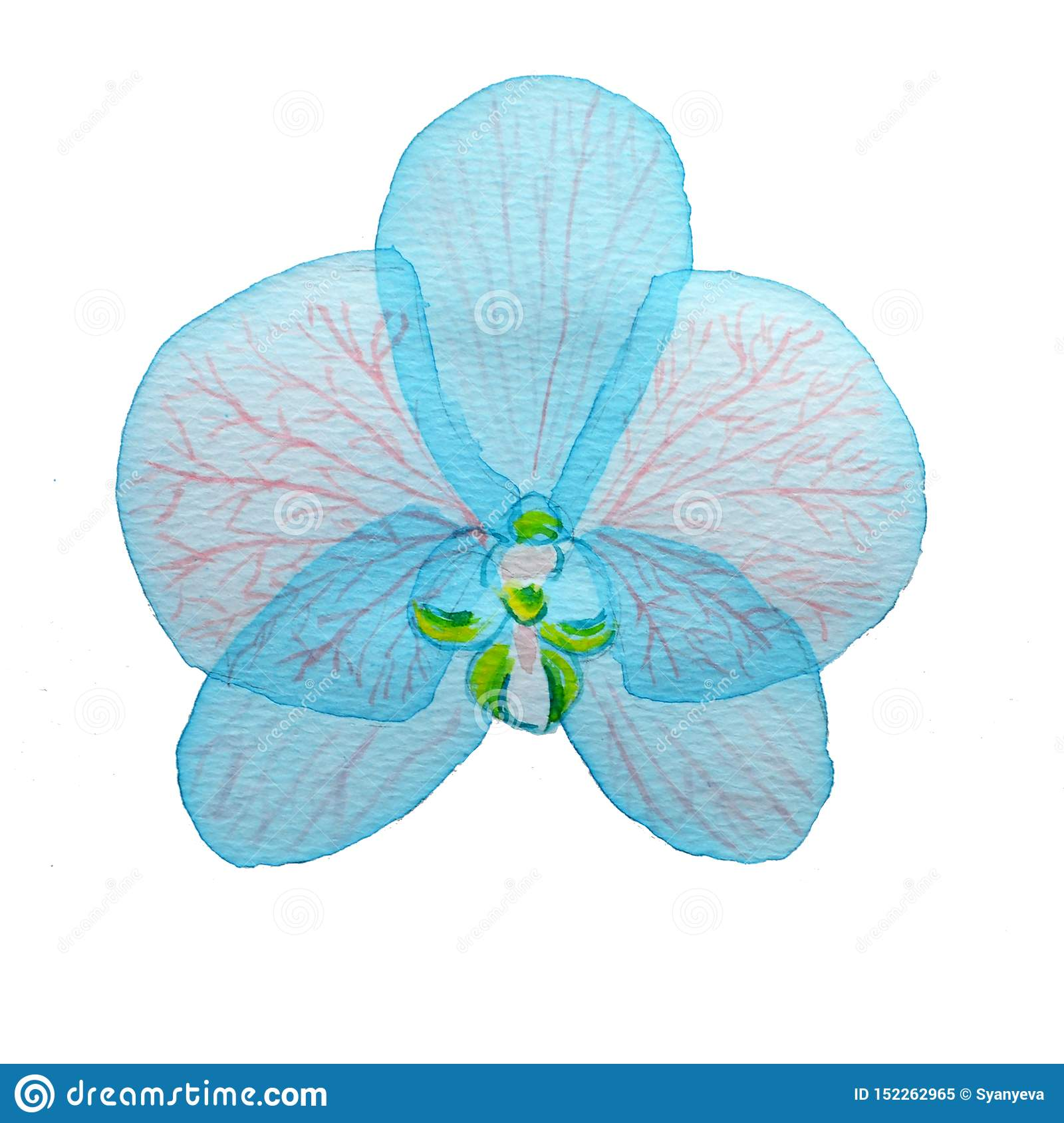 Watercolor blue transparent layered pink Flower orchid on white background