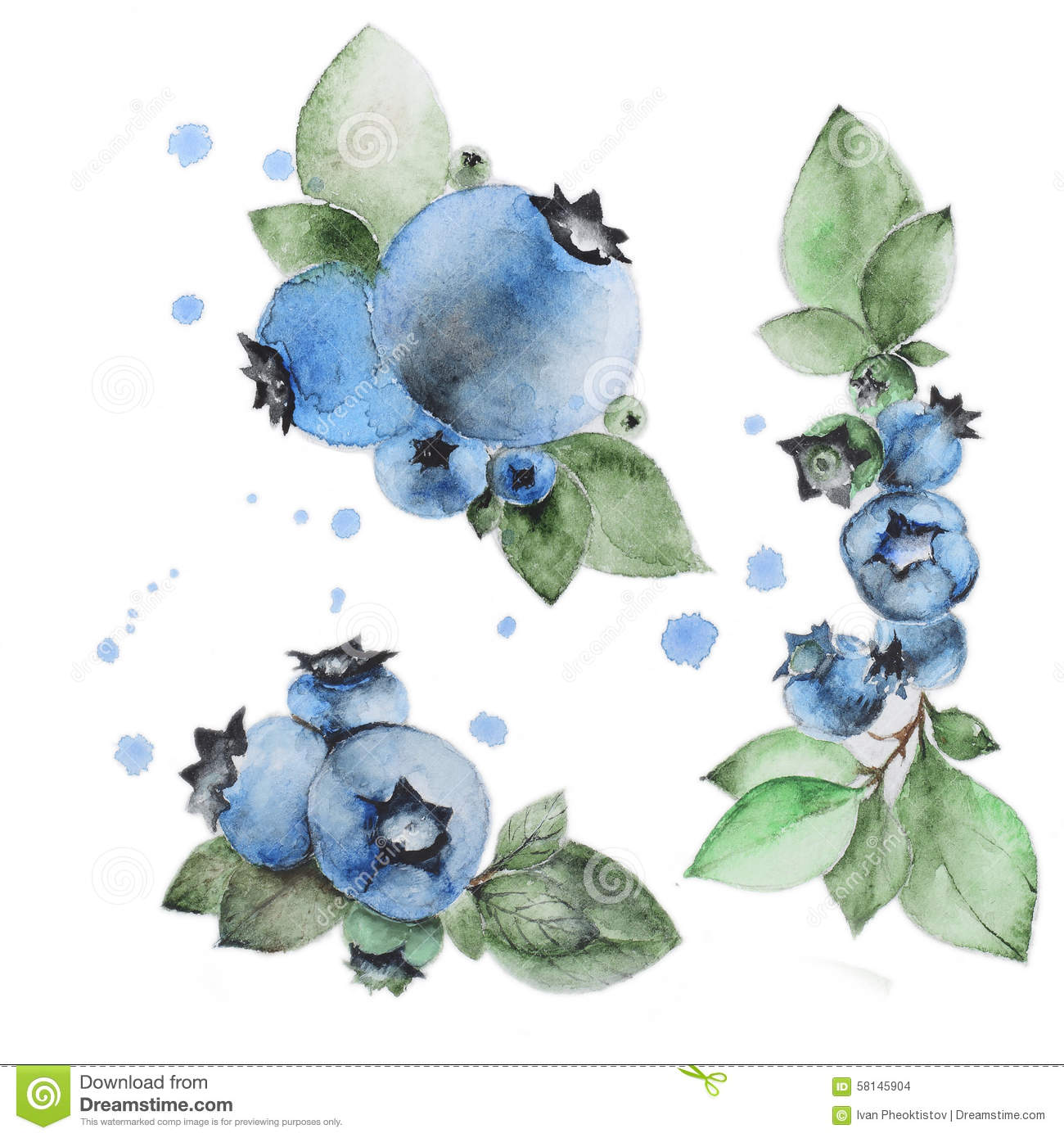 Watercolor Blueberry Stock Illustration - Image: 58145904
