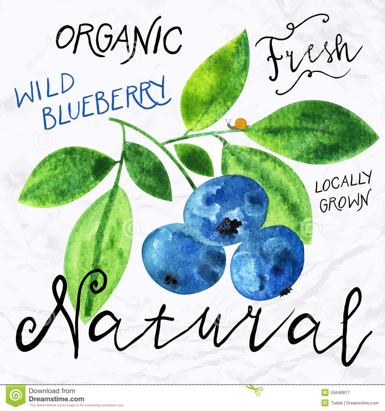 Watercolor blueberry stock vector  Illustration of concept